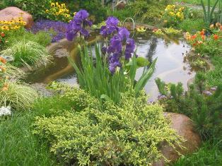 Регулярный сад в загородном доме
