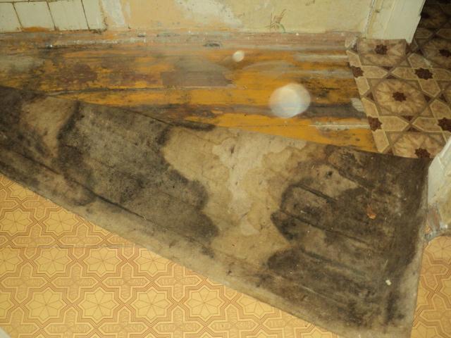 грибок на полу дома